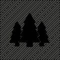 Miškininkystė